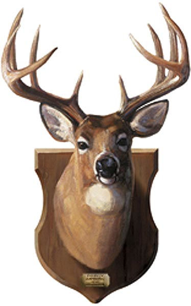 Deer Mount Wall Decor : Deer head mount peel and stick wall mural kids