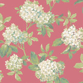 Red Hydrangea Wallpaper
