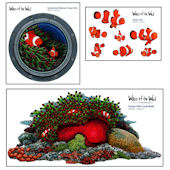 Clown Fish Coral Reef  Collection Decal