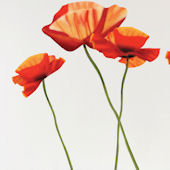 Art Applique Poppies Wall Sticker