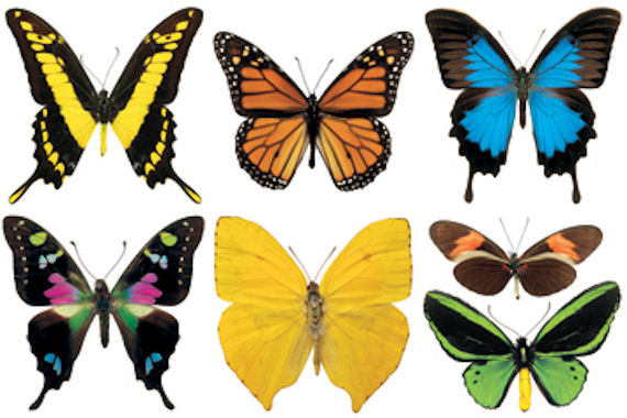 Biggies Butterflies Wall Stickies Decals - Wall Sticker Outlet