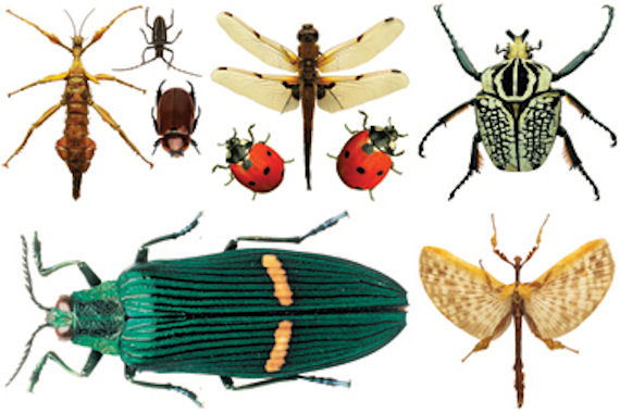 Biggies Insects Wall Stickies Decals
