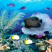 Ocean Reef  Wall Mural Three Sizes Available