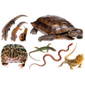 Biggies Reptiles  Wall Stickies Decals