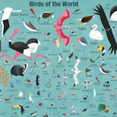 Birds Of The World Poster Decal