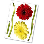 Komar Gerbera Peel and Stick Wall Sticker