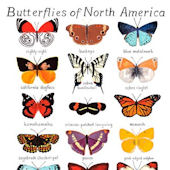 Butterflies of North Ameica Poster Decal