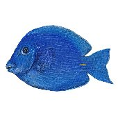 Blue Tang Fish Peel and Stick Wall Sticker