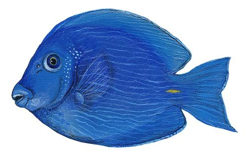 Blue Tang Fish Peel and Stick Wall Sticker - Kids Wall Decor Store