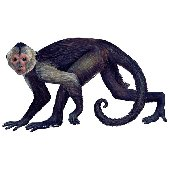 Capuchin Peel and Stick Wall Sticker
