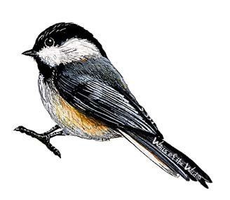 Chickadee Peel and Stick Wall Decal - Wall Sticker Outlet
