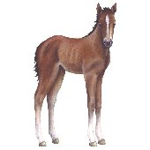 Baby Foal Peel and Stick Wall Mural