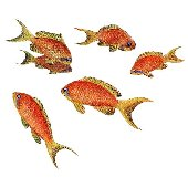 Goldfish Fish Peel and Stick Wall Sticker