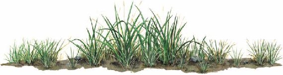 Grass Peel and Stick Wall Mural - Wall Sticker Outlet
