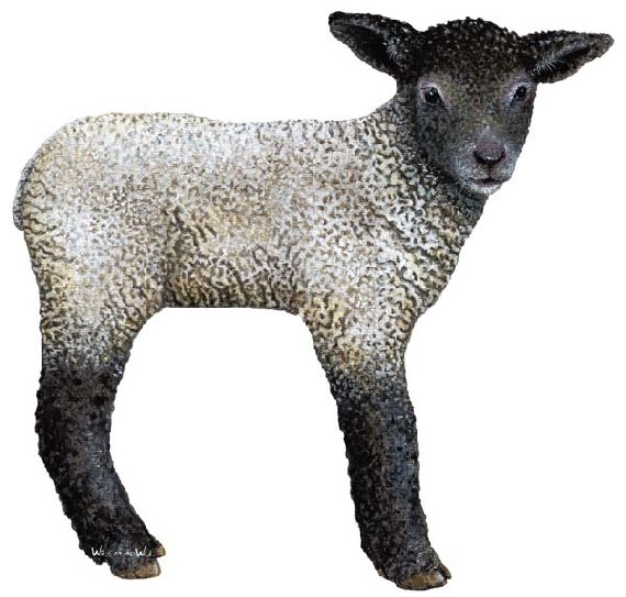 Lamb Peel and Stick Wall Mural - Wall Sticker Outlet