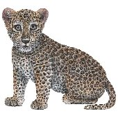 Leopard Cub Peel and Stick Wall Sticker