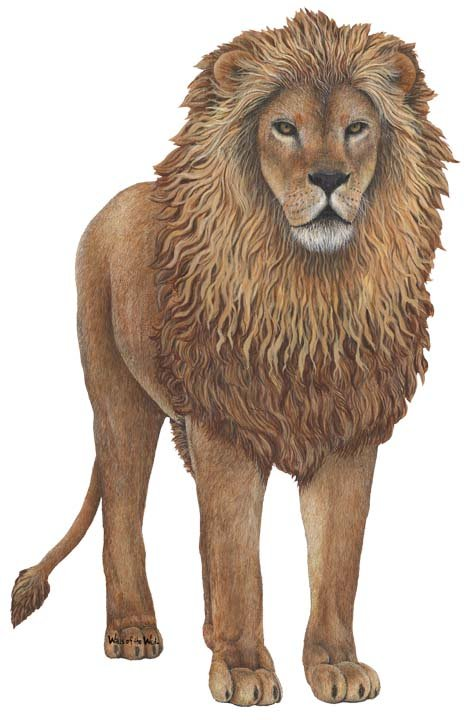 Lion Peel and Stick Wall Sticker - Wall Sticker Outlet