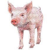 Baby Pig 2 Peel and Stick Wall Mural