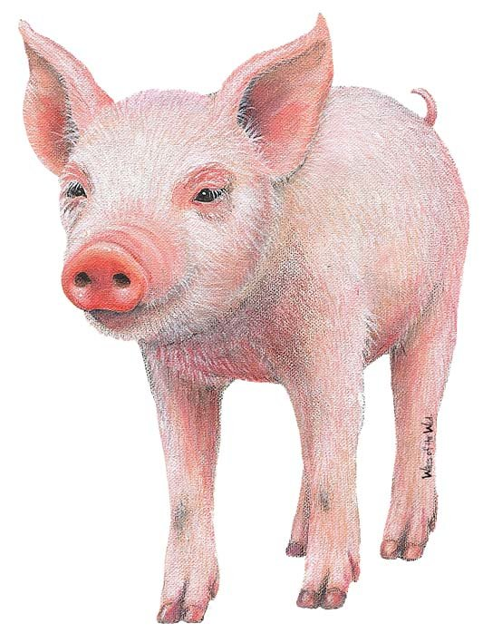 Baby Pig 2 Peel and Stick Wall Mural - Wall Sticker Outlet