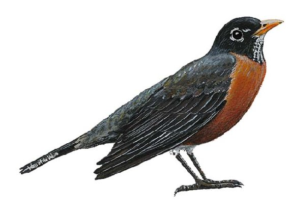 Robin Peel and Stick Wall Mural - Wall Sticker Outlet