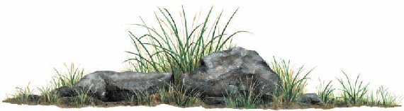 Rock Grass Peel and Stick Wall Mural - Wall Sticker Outlet