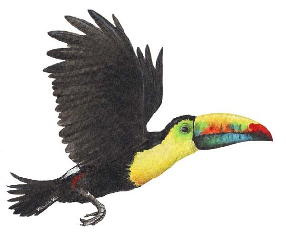 Toucan Peel and Stick Wall Sticker - Wall Sticker Outlet