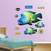 Fathead Humphead Fish Wall Graphic