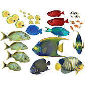 Tropical Fish Combo Pack Decal Collection