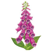 Foxglove Flower Wall Decal