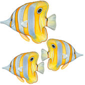 Angelfish Underwater Decals