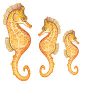 Tropical Sea Horses Underwater Decals