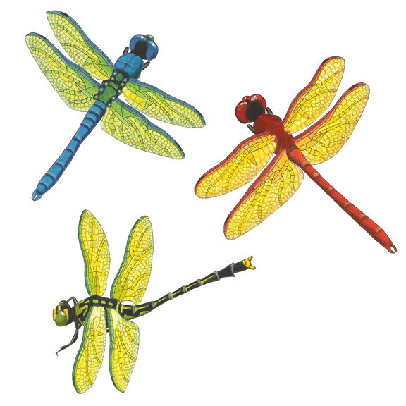 Dragonflies peel and stick wall decal for Dragonfly mural