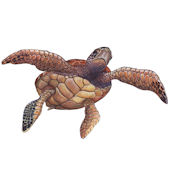 Sea Turtle 2 Peel and Stick Wall Decal