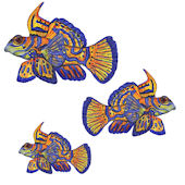 Mandaran Goby Fish Peel and Stick Wall Decal