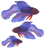 Fighting Fish Fish Peel and Stick Wall Decal
