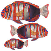 Harlequin Tusk  Fish Peel and Stick Wall Decal