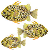 Pineapple Fish Peel and Stick Wall Decal