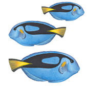 Blue Fish Set 3 Underwater Decals