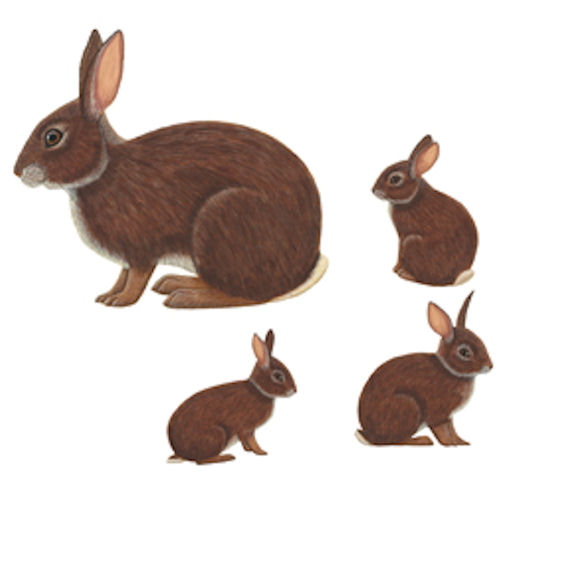 Wild Life Animals Mommy And Baby Rabbits
