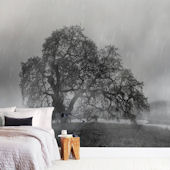Minted Warm In The Rain Repositionable Wall Mural