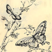 Toile Butterflies Black Canvas Wall Art