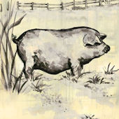 Toile Piggy Black Canvas Wall Art