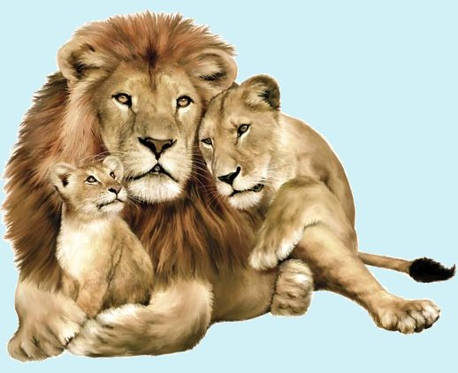Lion Family Jungle Animals Peel and Stick Mural - Wall Sticker Outlet