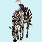 Zebra Jungle Animals Peel and Stick Wall Mural