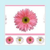 Flower Power Wall Border