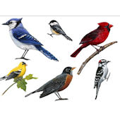 Song Bird Peel and Stick Wall Decal Collection