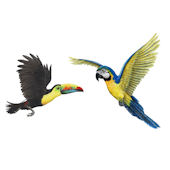 Tropical Bird Peel and Stick Wall Decal Collection