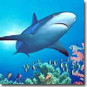 Undersea Ocean Wall Stickers