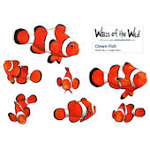 Clown Fish Peel and Stick Decals