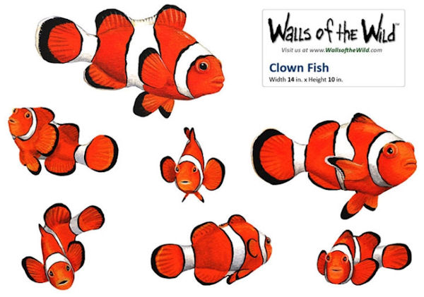 Clown Fish Peel and Stick Decals - Wall Sticker Outlet